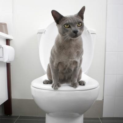 Photo courtesy of www.housetohome.co.uk