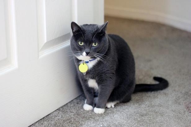 cat-1125190_640
